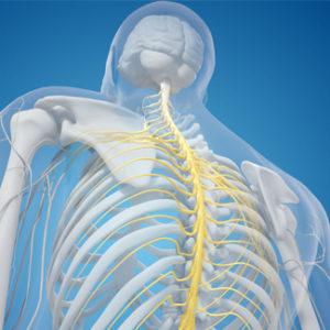chiropractic img 300x300 - Chiropractic